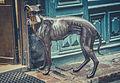 Gamla Stan Dog (15927471965).jpg