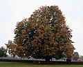 Gammel Holtegaard tree.jpg
