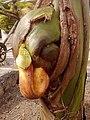 Ganapati Bappa Moraya by Akshay Dinde.jpg