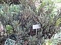 Gardenology.org-IMG 0373 rbgs10dec.jpg