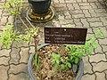 Gardenology.org-IMG 7951 qsbg11mar.jpg