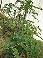 Gardenology.org-IMG 7990 qsbg11mar.jpg