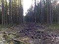 Gatchinsky District, Leningrad Oblast, Russia - panoramio (11).jpg