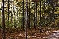 Gatineau Park, October 2018 (57) (45330590181).jpg