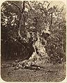 Gertrude Elizabeth Rogers (British - (Gnarled Tree) - Google Art Project.jpg