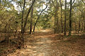 Gfp-florida-big-shaols-state-park-forest-trail.jpg