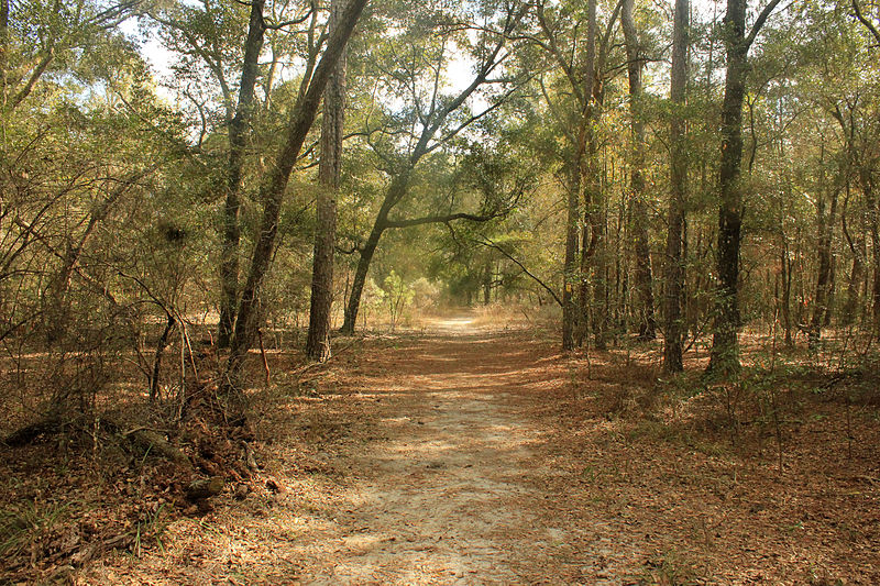 File:Gfp-florida-big-shaols-state-park-forest-trail.jpg