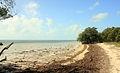 Gfp-florida-keys-long-key-state-park-shoreline-view.jpg