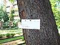 Giardino botanico di Brera (Milan 08.jpg