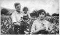 Gladiola1915.tiff