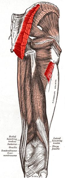 Human Anatomy/Gross Anatomy - Wikibooks, open books for an ...