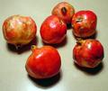 Granatapfel 2.png