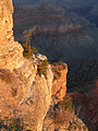Grand Canyon National Park Early sun on.jpg