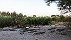 Granja de cocodrilos, Maun, Botsuana, 2018-08-01, DD 49.jpg
