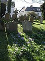 Gravestones and crocuses, Chagford - geograph.org.uk - 716442.jpg