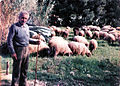 Greek Shepherd in the field - May 1985.jpg