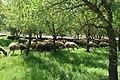 Green pastures near Adullam.jpg