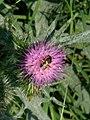 Grenchen - Hymenoptera 2.jpg