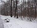 Großer Garten, Dresden in winter (1063).jpg