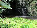 Grotte teanateatea.jpg