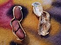 Groundnut-- A Close View On Packing.jpg