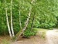 Grunewald - Waldweg (Woodland Path) - geo.hlipp.de - 37191.jpg