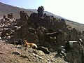 Gusfandsara Damavand 1 - panoramio.jpg