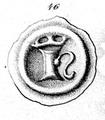 Håkon VI 2.png