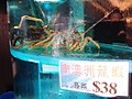 HK SW 上環 Sheung Wan 安泰街 On Tai Street 海港酒家 Victoria Harbour Seafood Restaurant fresh live water tank August 2019 SSG 01.jpg