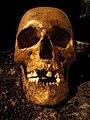 Hallonflickans kranium 9989.jpg