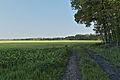 Halverde Naturschutzgebiet Kreienfeld 08.JPG