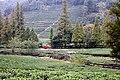 Hangzhou-Teeplantage-06-Straeucher-2012-gje.jpg