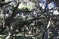 Harenna Forest (16332646362).jpg