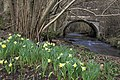 Hartoft Bridge with wild daffodils - geograph.org.uk - 149392.jpg