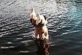 Headfirst dive (Unsplash).jpg