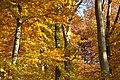 Herbst im NSG Kathagenberg (HOL).jpg