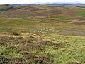 Hill countryside in Teviotdale - geograph.org.uk - 549463.jpg