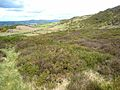 Hillside at Corrakit - geograph.org.uk - 446760.jpg