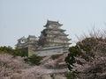 Himeji castle sakura full bloom.JPG