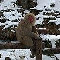 Hirao, Yamanouchi, Shimotakai District, Nagano Prefecture 381-0401, Japan - panoramio (16).jpg