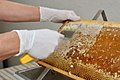 Honey extracting.jpg