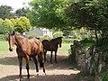 Horses near Tregender - geograph.org.uk - 182858.jpg