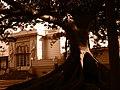 Hotel del Prado Fachada lateral (calle Pena) mirado desde un monumento vegetal del Prado 2.JPG