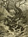 Hunting and trapping stories; a book for boys (1903) (14780145004).jpg