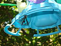Hymenoptera in Brazil ILF 01.jpg