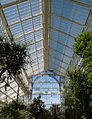 IMG 5296 Berlin Mittelmeer greenhouse inside.jpg