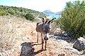 Idra, Greece - panoramio (6).jpg