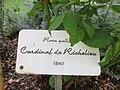 Ile aux Roses 020.jpg