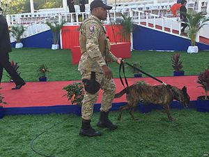 Haitian National Police - A Haitian police canine handler at the presidential inauguration in 2017.