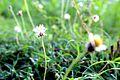 Indian Weeds.jpg